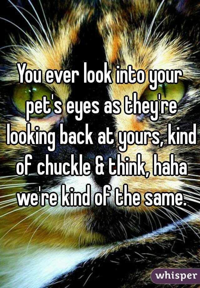 You ever look into your pet's eyes as they're looking back at yours, kind of chuckle & think, haha we're kind of the same.