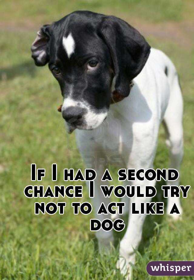 If I had a second chance I would try not to act like a dog