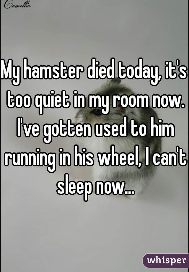 My hamster died today, it's too quiet in my room now. I've gotten used to him running in his wheel, I can't sleep now...