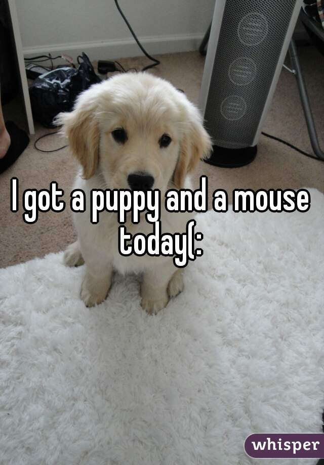I got a puppy and a mouse today(: