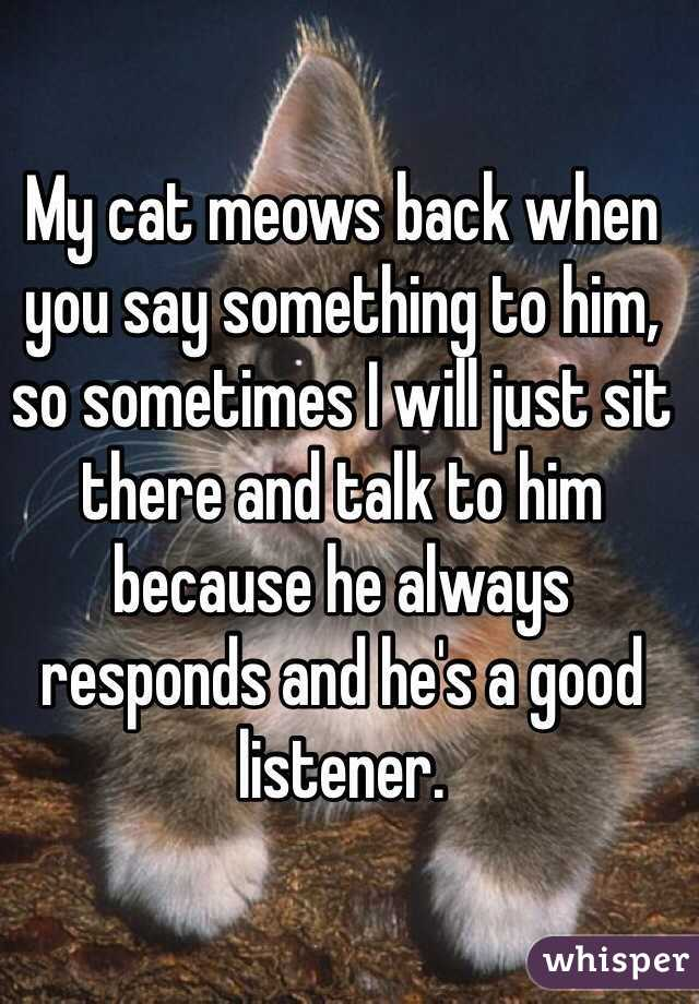 My cat meows back when you say something to him, so sometimes I will just sit there and talk to him because he always responds and he's a good listener.