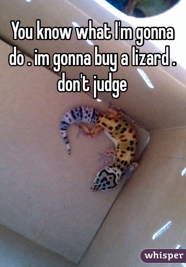 You know what I'm gonna do . im gonna buy a lizard . don't judge