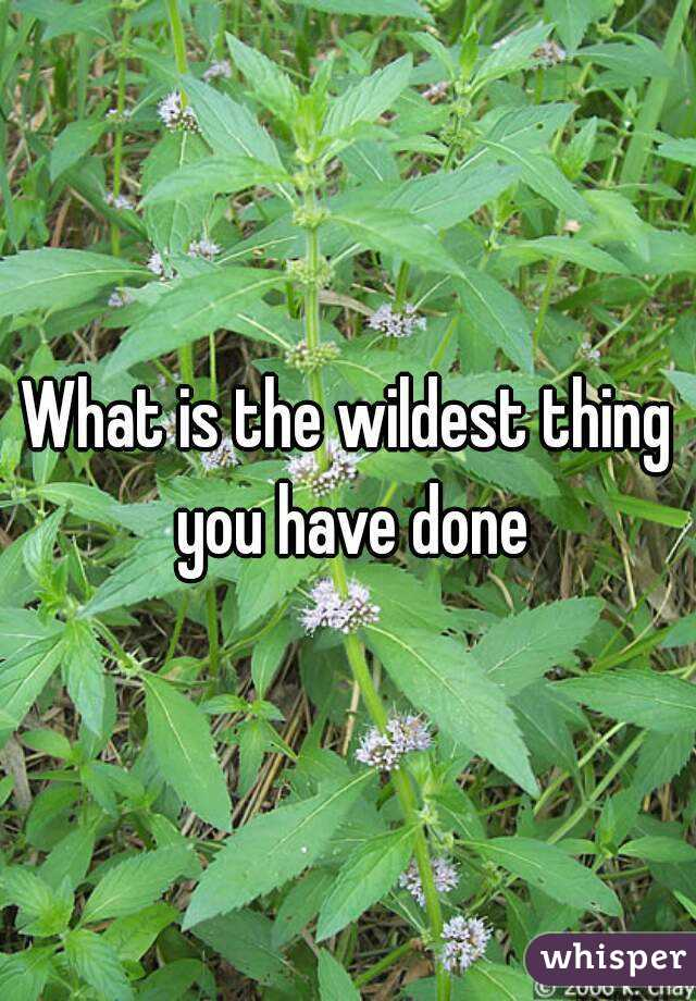 What is the wildest thing you have done
