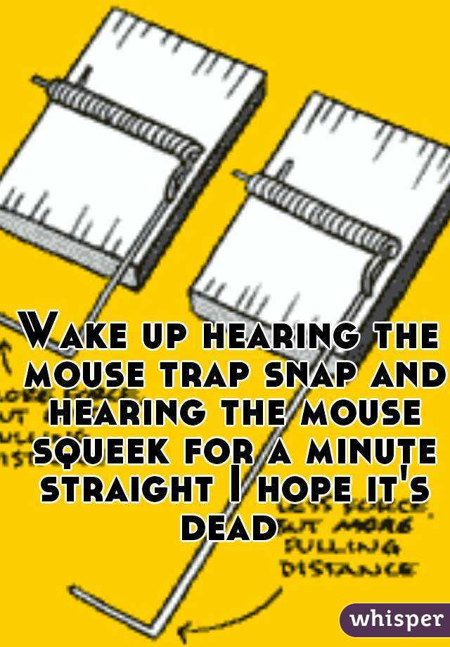 Wake up hearing the mouse trap snap and hearing the mouse squeek for a minute straight I hope it's dead
