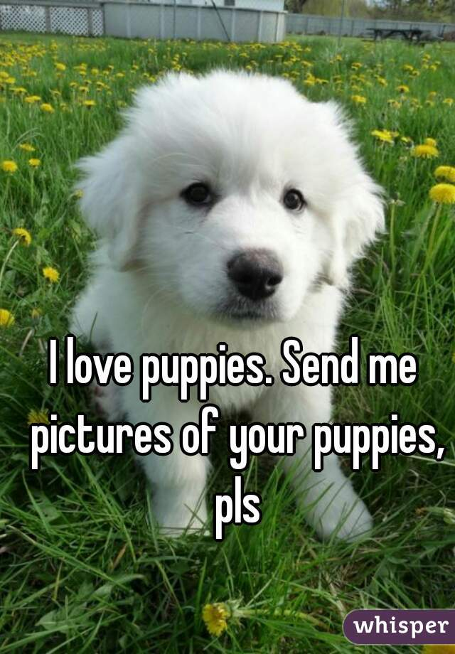 I love puppies. Send me pictures of your puppies, pls