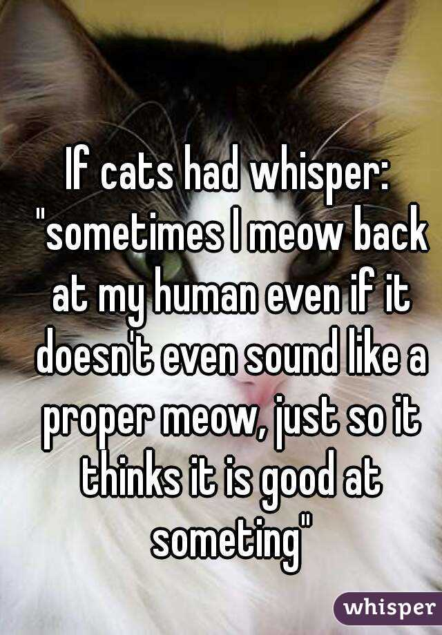 "If cats had whisper: ""sometimes I meow back at my human even if it doesn't even sound like a proper meow, just so it thinks it is good at someting"""