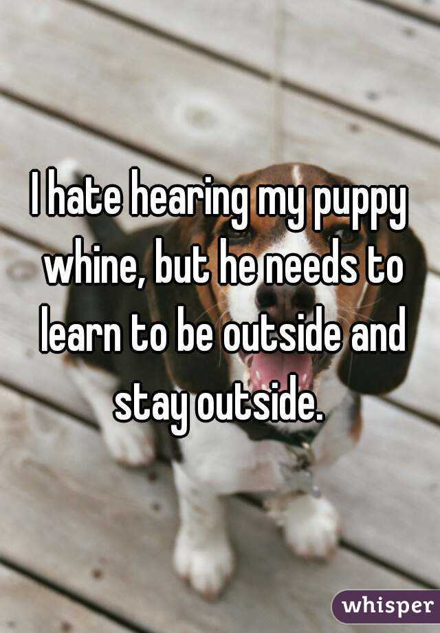 I hate hearing my puppy whine, but he needs to learn to be outside and stay outside.