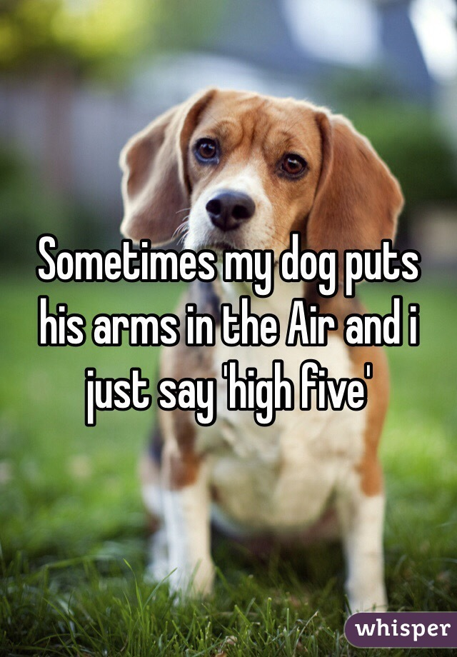 Sometimes my dog puts his arms in the Air and i just say 'high five'