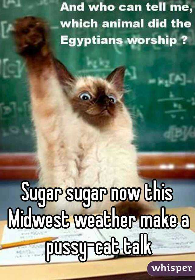 Sugar sugar now this Midwest weather make a pussy-cat talk