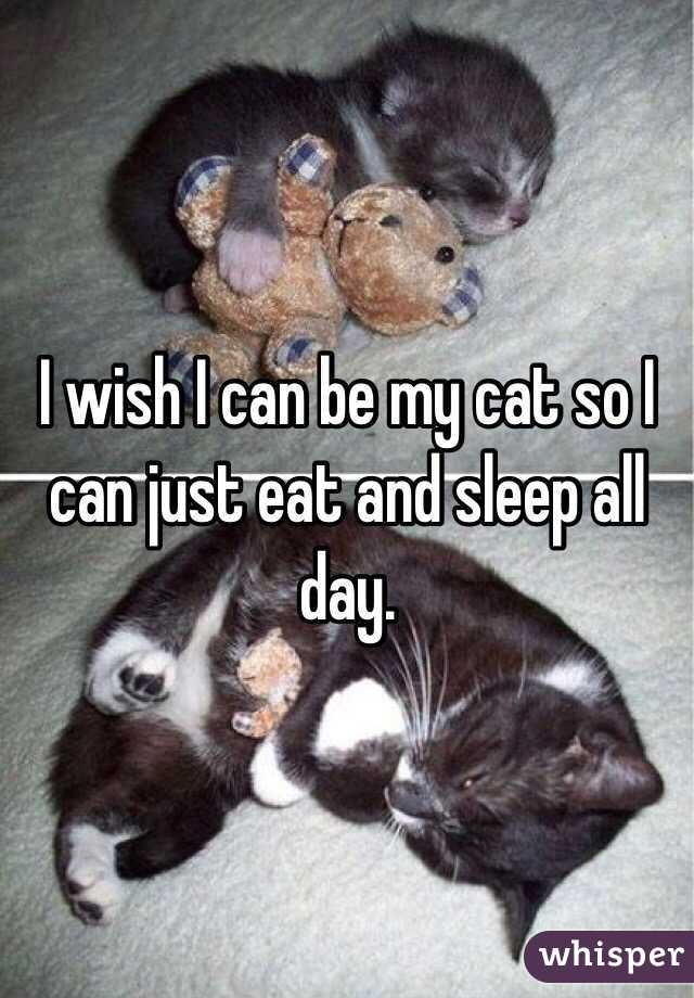 I wish I can be my cat so I can just eat and sleep all day.