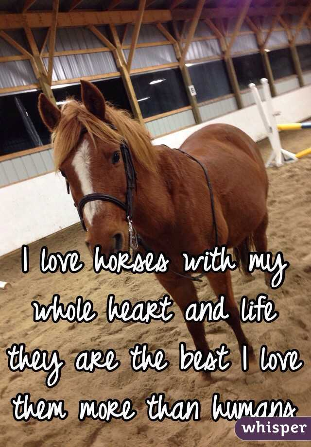 I love horses with my whole heart and life they are the best I love them more than humans