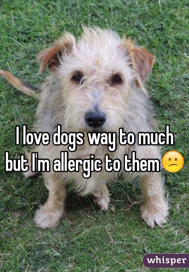 I love dogs way to much but I'm allergic to them😕