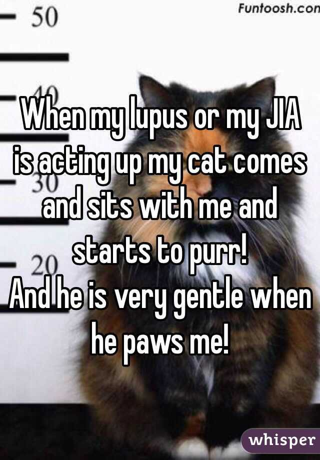 When my lupus or my JIA is acting up my cat comes and sits with me and starts to purr!  And he is very gentle when he paws me!