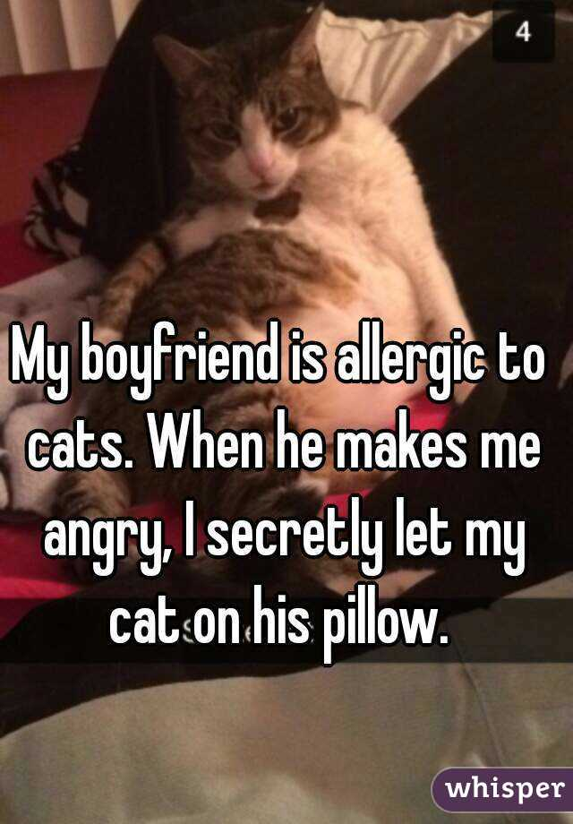 050ce4a1bcfc62147234e4595912e9d4a80859 wm?v=3 my boyfriend is allergic to cats when he makes me angry, i secretly