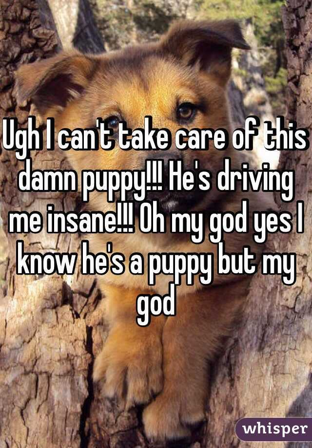 Ugh I can't take care of this damn puppy!!! He's driving me insane!!! Oh my god yes I know he's a puppy but my god