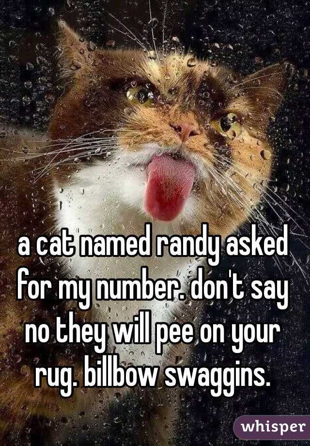 a cat named randy asked for my number. don't say no they will pee on your rug. billbow swaggins.
