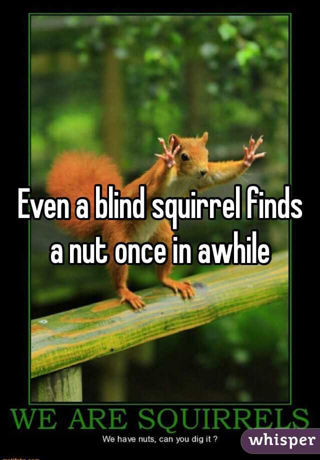 Even a blind squirrel finds a nut once in awhile