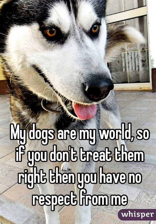 My dogs are my world, so if you don't treat them right then you have no respect from me