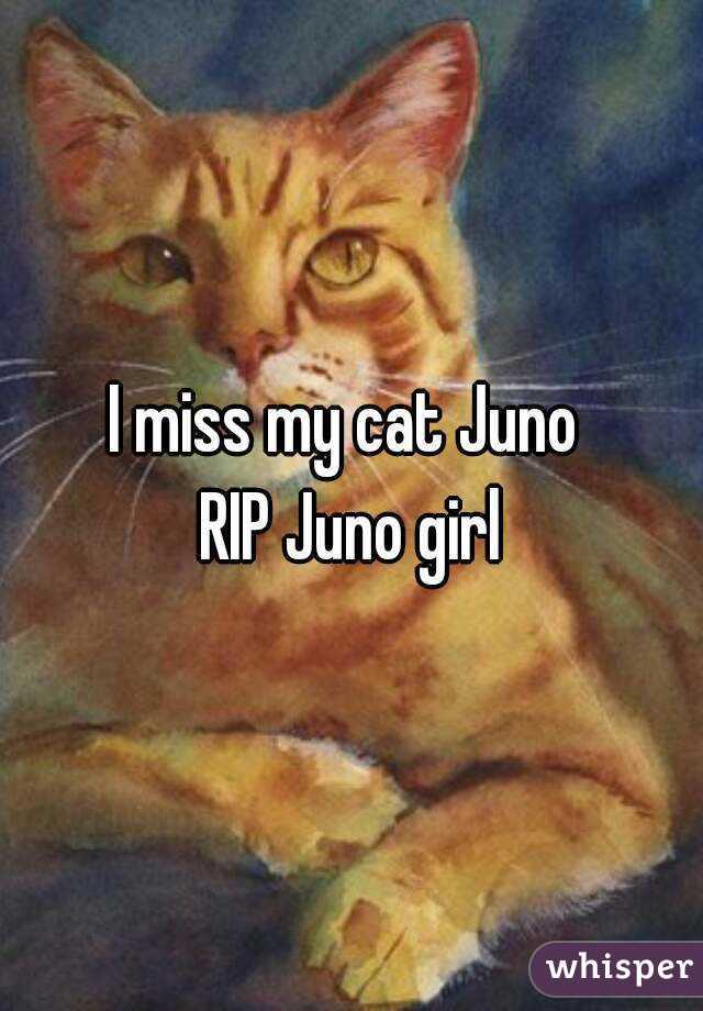 I miss my cat Juno  RIP Juno girl
