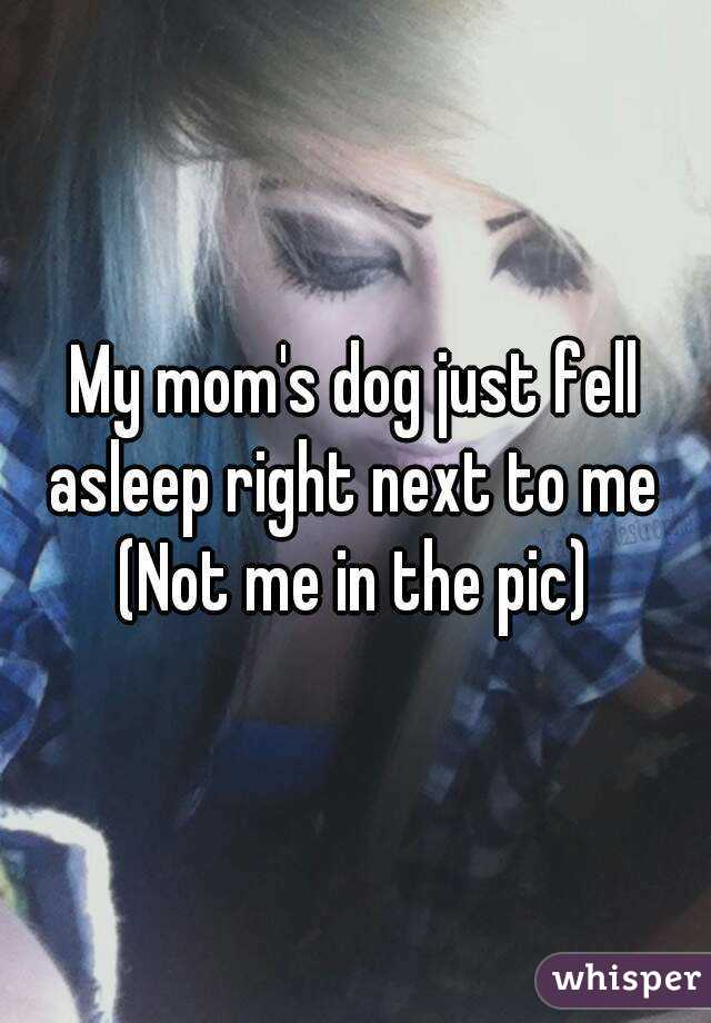 My mom's dog just fell asleep right next to me  (Not me in the pic)
