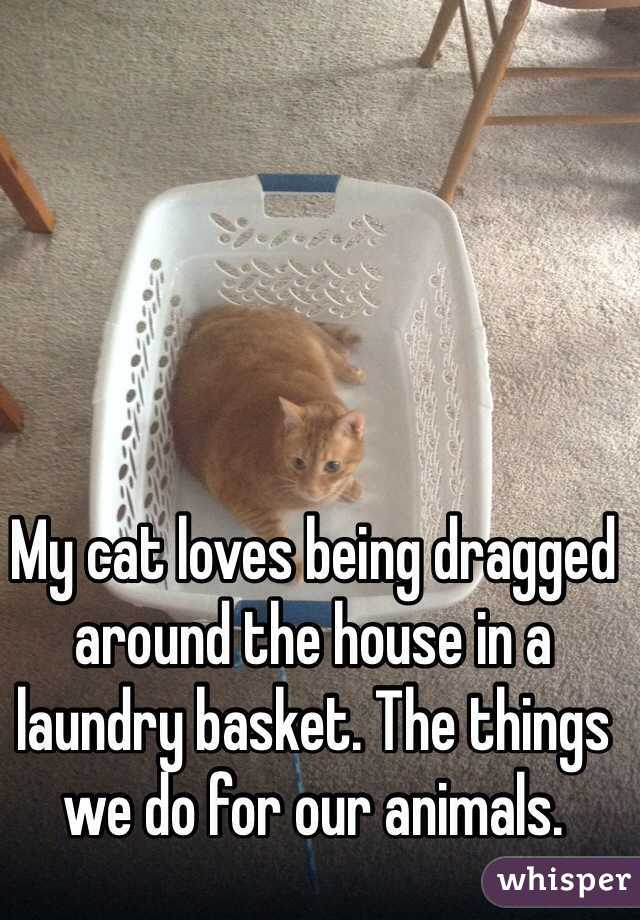 My cat loves being dragged around the house in a laundry basket. The things we do for our animals.