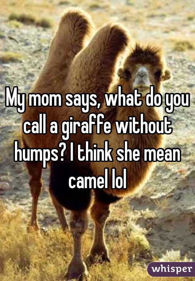 My mom says, what do you call a giraffe without humps? I think she mean camel lol