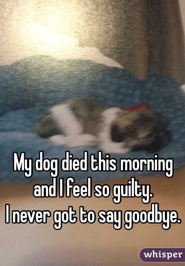 My dog died this morning and I feel so guilty.  I never got to say goodbye.