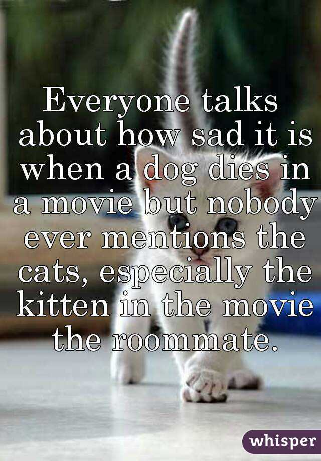 Everyone talks about how sad it is when a dog dies in a movie but nobody ever mentions the cats, especially the kitten in the movie the roommate.