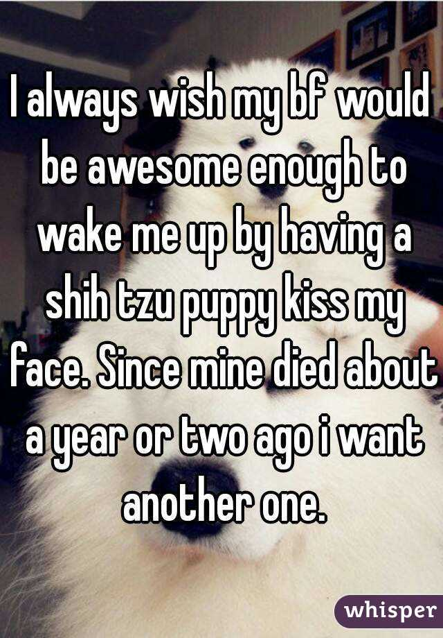 I always wish my bf would be awesome enough to wake me up by having a shih tzu puppy kiss my face. Since mine died about a year or two ago i want another one.