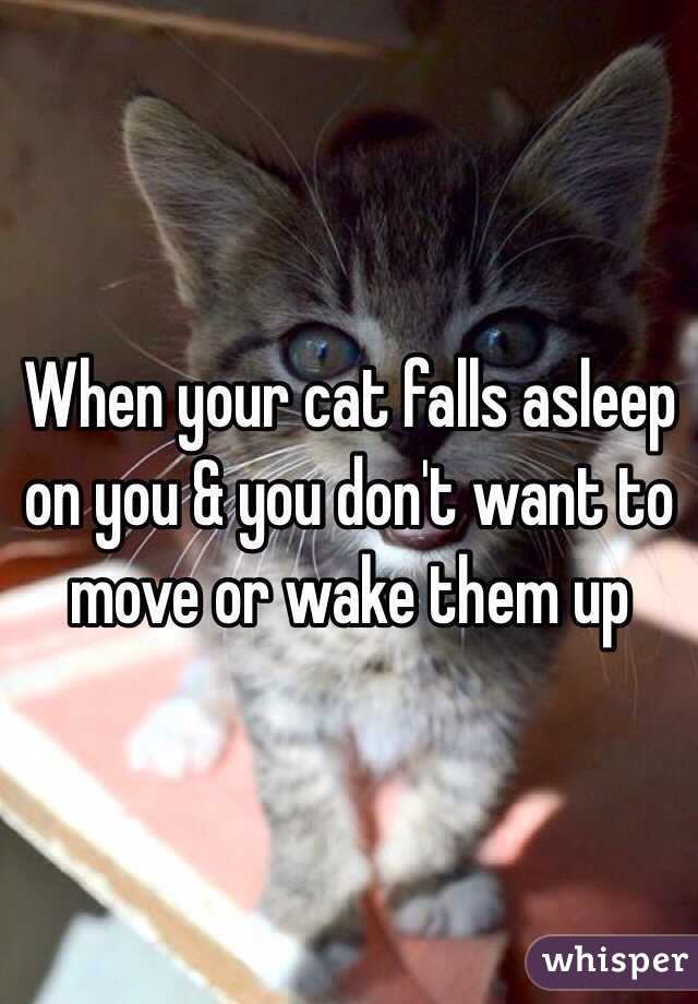 Cat Doesn T Wake Me Up For Food Anymore