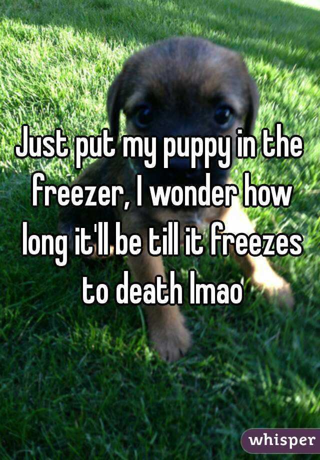 Just put my puppy in the freezer, I wonder how long it'll be till it freezes to death lmao