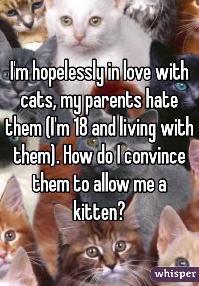 I'm hopelessly in love with cats, my parents hate them (I'm 18 and living with them). How do I convince them to allow me a kitten?