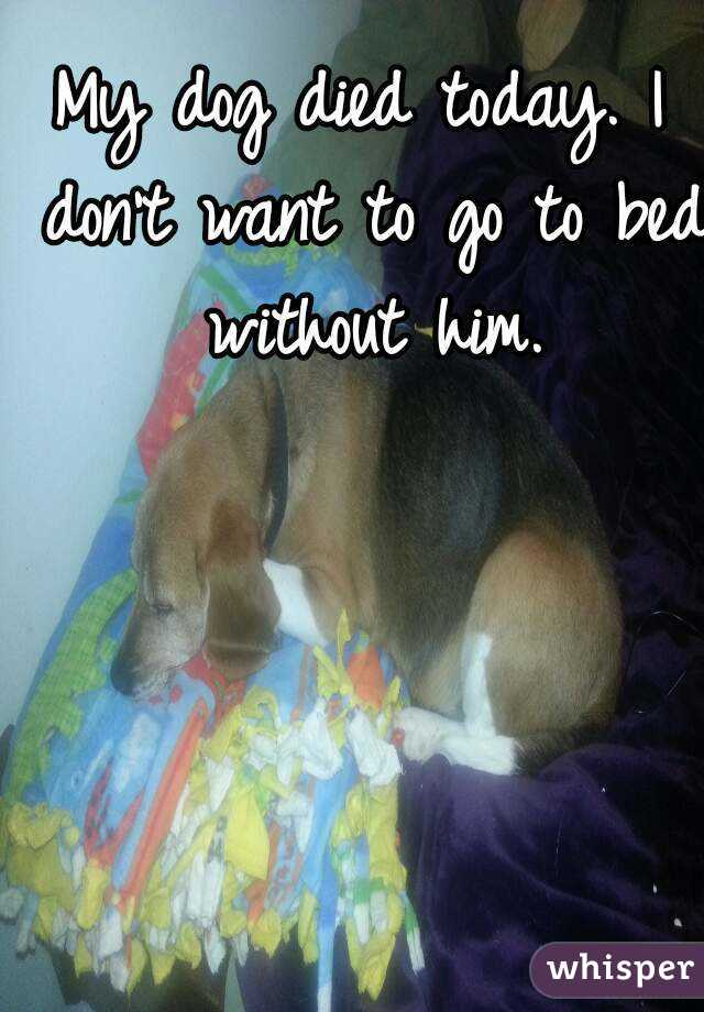 my dog died today i don t want to go to bed without him