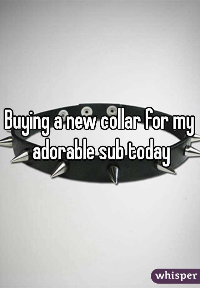 Buying a new collar for my adorable sub today
