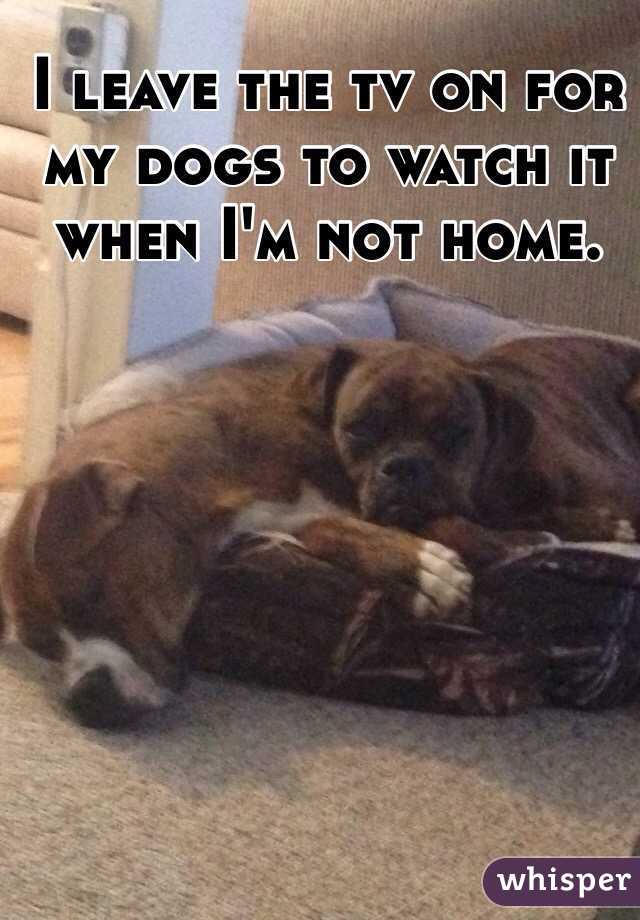 I leave the tv on for my dogs to watch it when I'm not home.