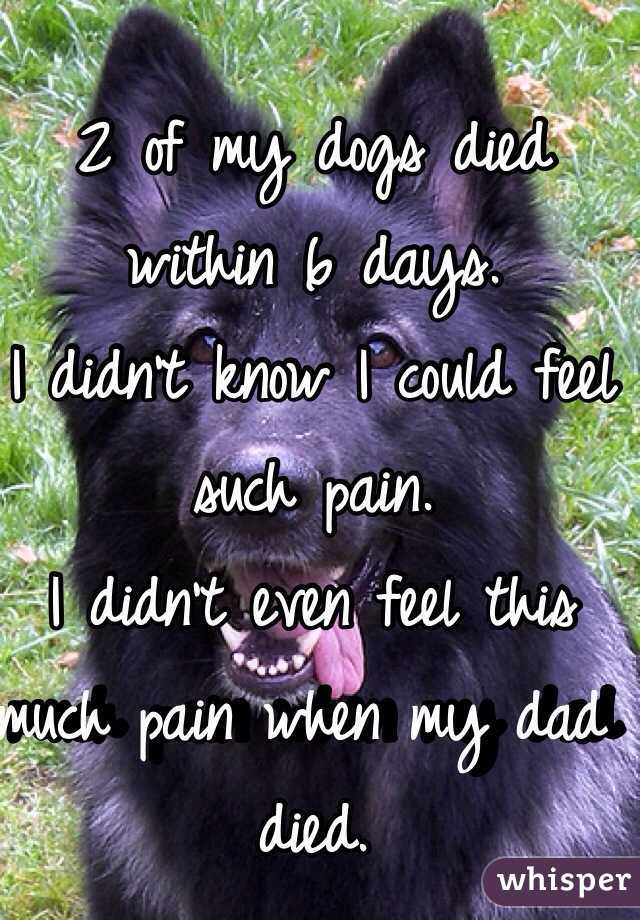 2 of my dogs died within 6 days. I didn't know I could feel such pain. I didn't even feel this much pain when my dad died.
