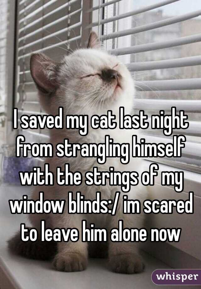 I saved my cat last night from strangling himself with the strings of my window blinds:/ im scared to leave him alone now