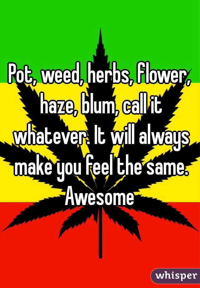 Pot, weed, herbs, flower, haze, blum, call it whatever. It will always make you feel the same. Awesome