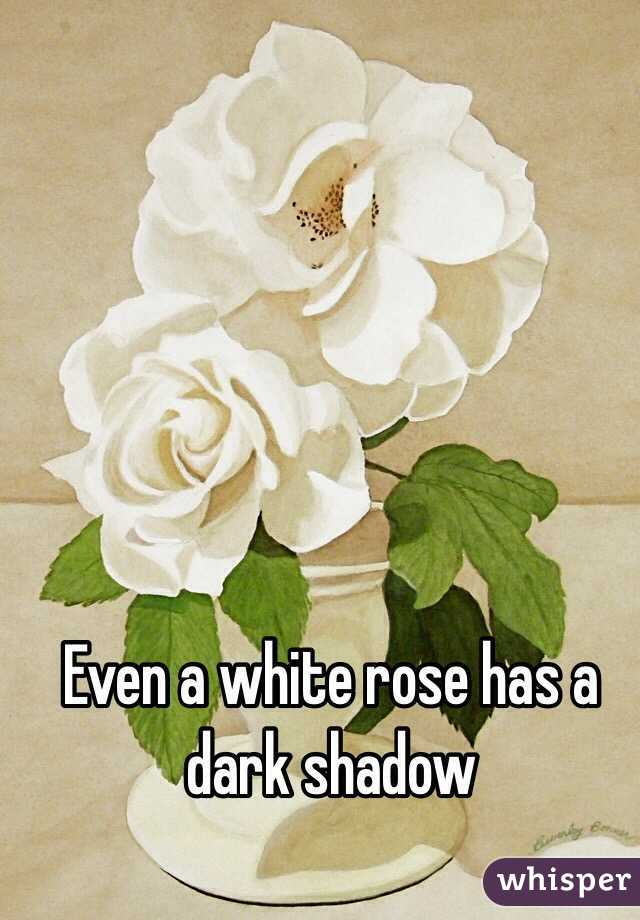 Even a white rose has a dark shadow