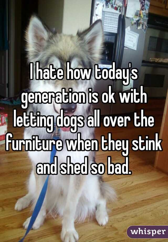 I hate how today's generation is ok with letting dogs all over the furniture when they stink and shed so bad.