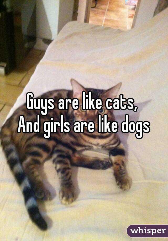 Guys who like cats