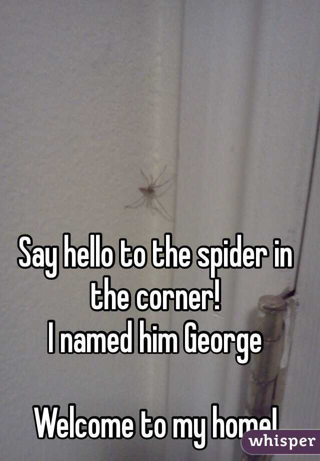 Say hello to the spider in the corner! I named him George   Welcome to my home!