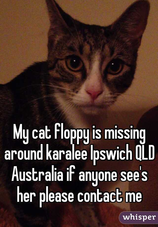 My cat floppy is missing around karalee Ipswich QLD Australia if anyone see's her please contact me