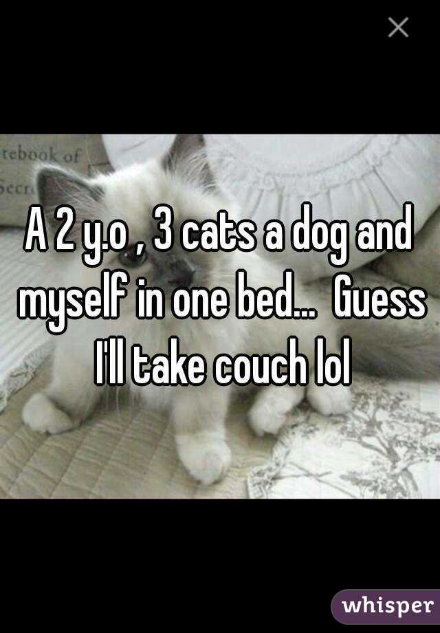A 2 y.o , 3 cats a dog and myself in one bed...  Guess I'll take couch lol