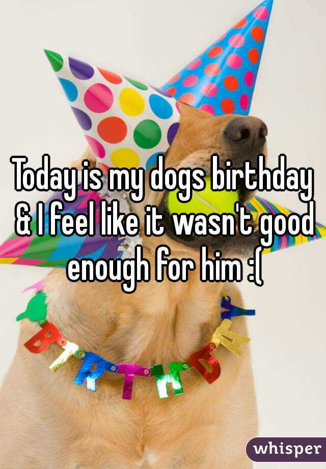 Today is my dogs birthday & I feel like it wasn't good enough for him :(