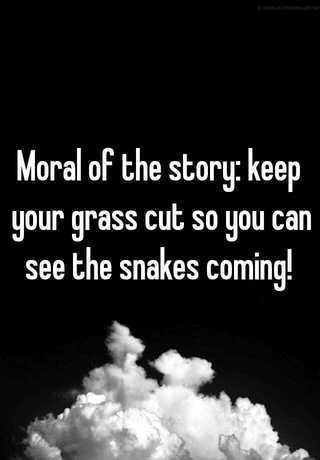 Moral of the story: keep your grass cut so you can see the snakes coming!