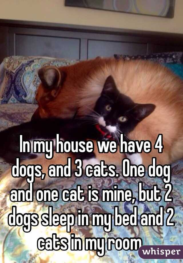 In My House We Have 4 Dogs And 3 Cats One Dog And One Cat Is