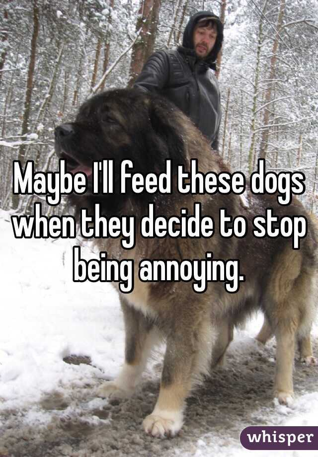 Maybe I'll feed these dogs when they decide to stop being annoying.