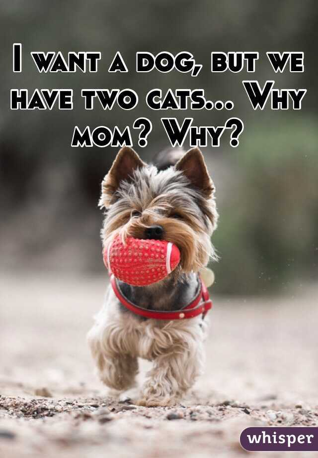 I want a dog, but we have two cats... Why mom? Why?