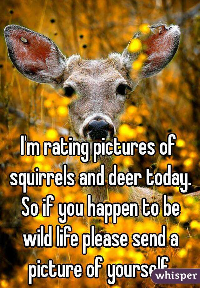 I'm rating pictures of squirrels and deer today. So if you happen to be wild life please send a picture of yourself.